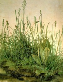 Albrecht-Durer-The-Large-Turf--782x1024