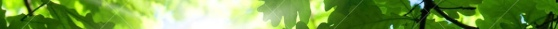 spring-oak-tree-13388614.jpg